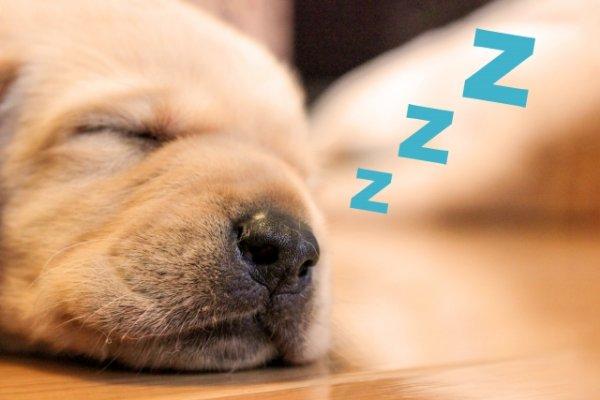 鍼治療を受けるとなぜ眠くなるの?【自律神経への作用・睡眠の改善・リラックス効果】